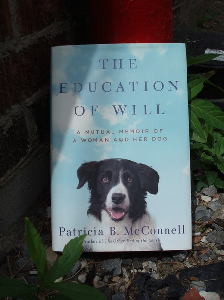 cover of The Education of Will