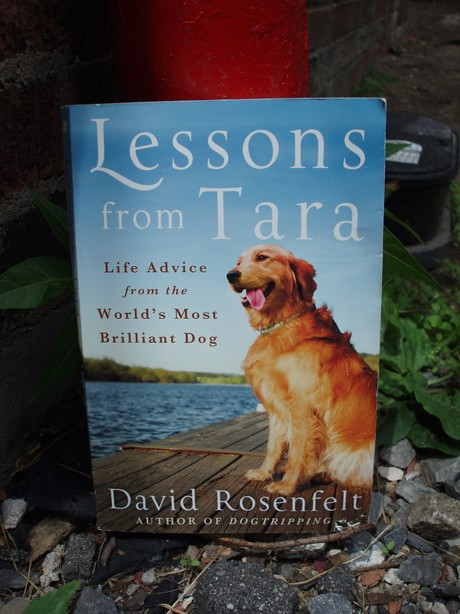 The book cover of Lessons from Tara