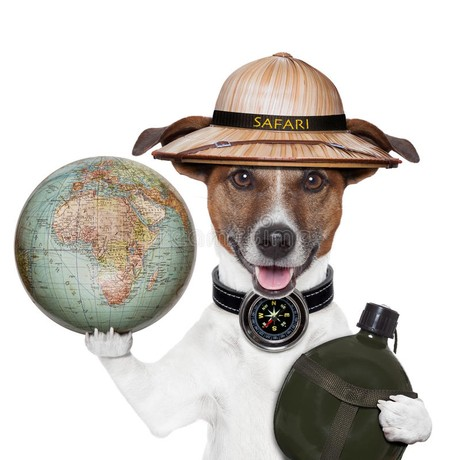 A jack russell equipped for a safari holds a globe.