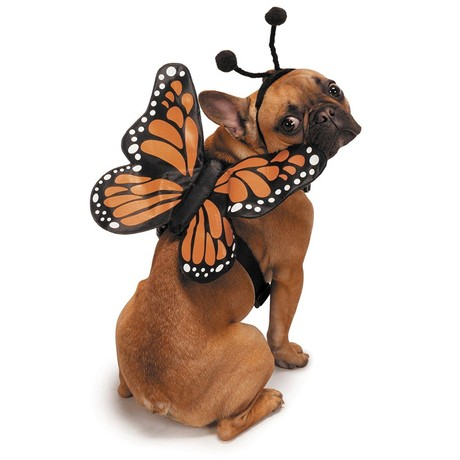 A dog in a butterly costume